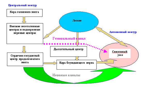Схема двухконтурной модели